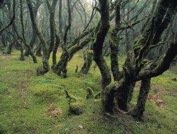 Parque Nacional Garjonay en Canarias