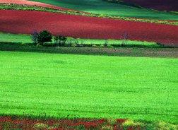 La Almarcha en Castilla-La Mancha