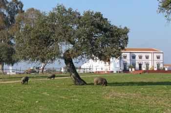 Finca Los Llanos in Atalaya (Badajoz)